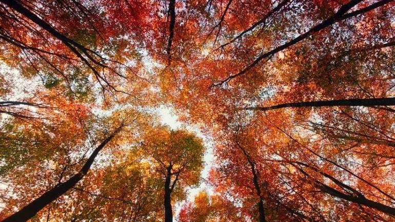 Чому листя жовтіє