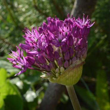 Архівація квітів